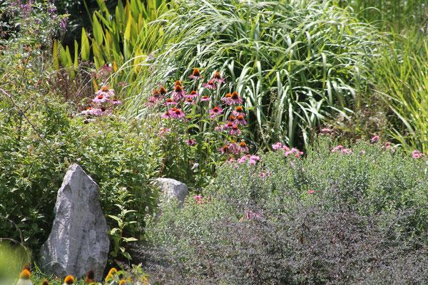 Echinacées et mischantus  ©P. Lamour