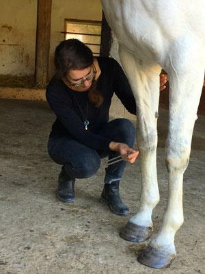 Stimmgabeln zur Linderung bei Huf- und Beinbeschwerden ...