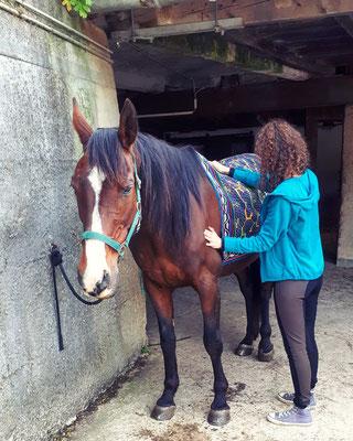 Die Kraft des Herzens aufbauen, den Atem befreien - eine schöne Methode wenn Ihr Pferd z.B. Atembeschwerden hat.