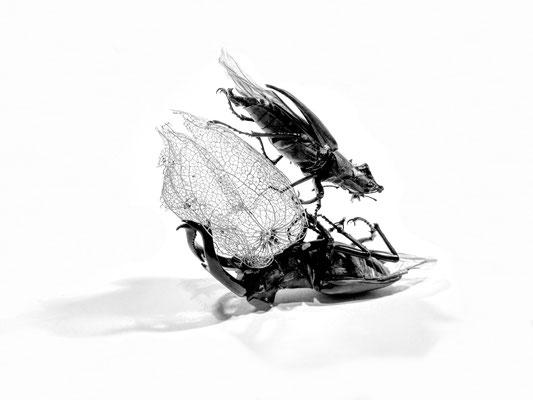 Kristin Finsterbusch, Balance I, Fotografie, 2018, variable Größe