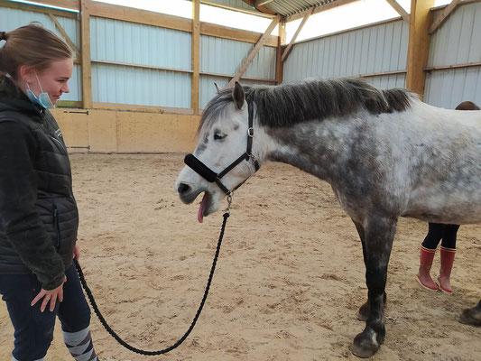 Un poney détendu grâce au Shiatsu
