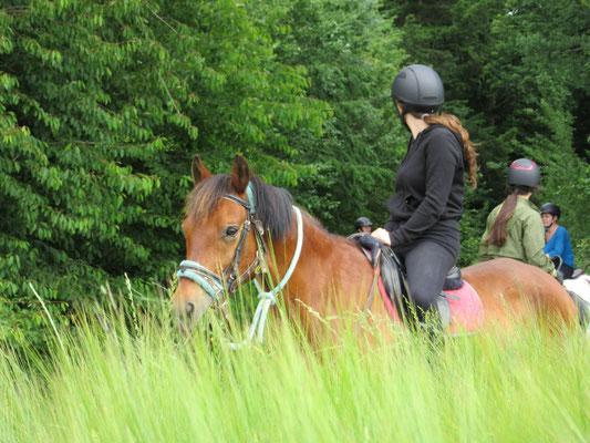 Balade à poney, écurie les Rouillons à Sens