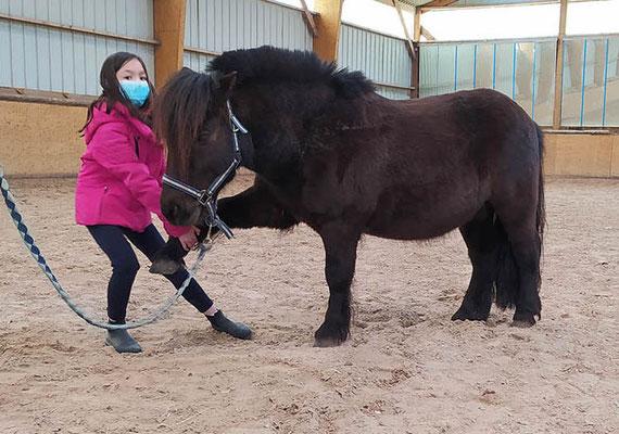 Initiation au Shiatsu pour poney à l'Ecurie les Rouillons avec Isabelle Audinet