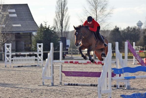 Travail du cheval à l'obstacle, pension chevaux aux Rouillons, 89 Sens