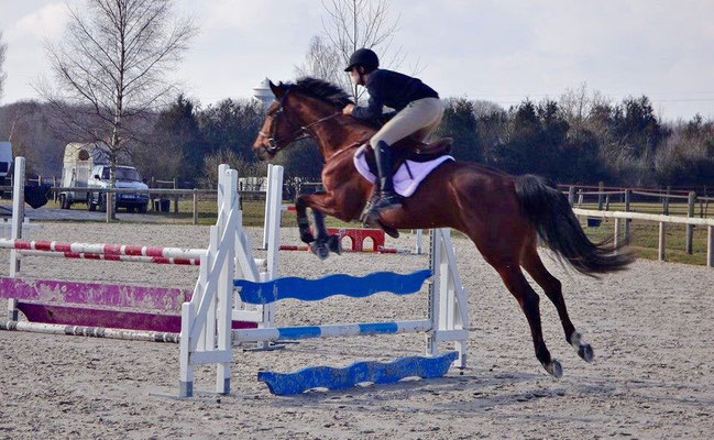 Cours de CSO, pension chevaux aux Rouillons, 89 Sens