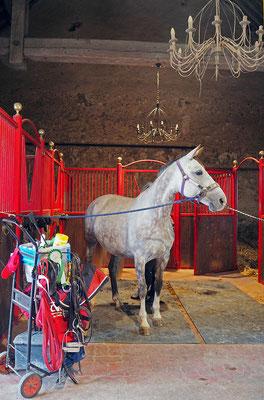 Cocooning cheval, écurie de propriétaires les Rouillons, 89 Sens