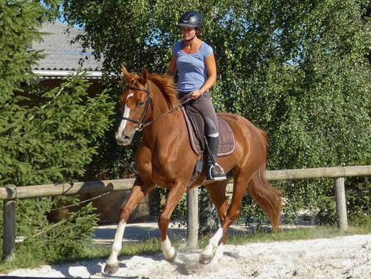Préparation du cheval de CCE avec Fanny Lelièvre, écurie les Rouillons, 89 Sens