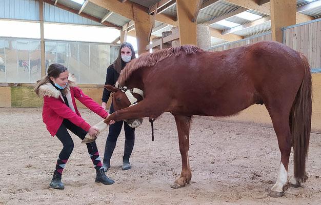 On apprend les étirements sur les poneys