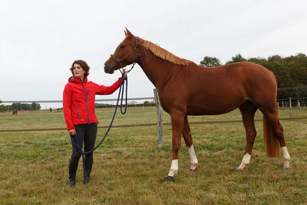 Pension pour chevaux, écurie de propriétaires les Rouillons, 89 Sens