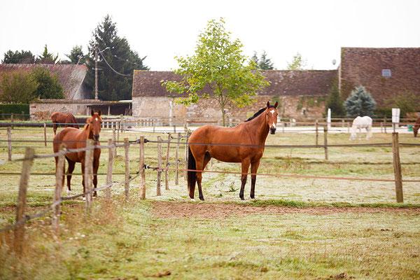 Ambiance nature, haras, chevaux pour location événementielle, écurie les Rouillons, 89 Sens
