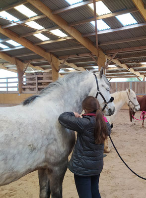 On apprend le palper-rouler sur poney