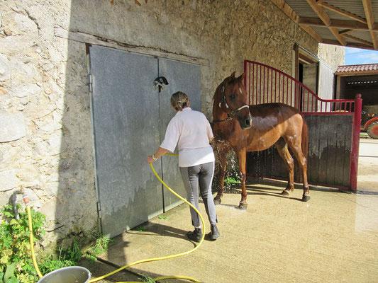 Douche chevaux à l'Ecurie les Rouillons, au Nord de l'Yonne