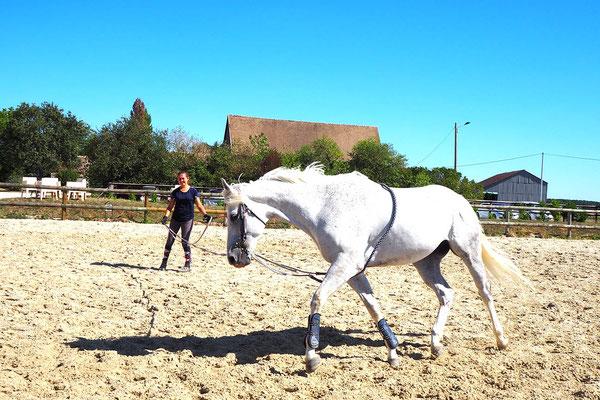 Travail en longe pour cheval de propriétaire à l'écurie les Rouillons