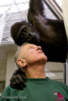 Tierarz Dr. Wolfram Rietschel mit jungem Gorilla im Jungtieraufzuchtshaus der Wilhelma