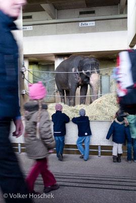 Menschen im Zoo