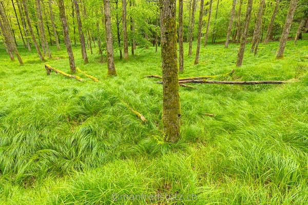 Ein Wald im Kanton Aargau