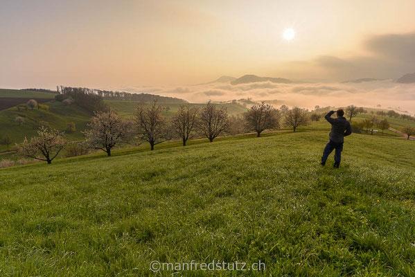 Kirschbäume am Chriesiwäg im Fricktal, Aargau