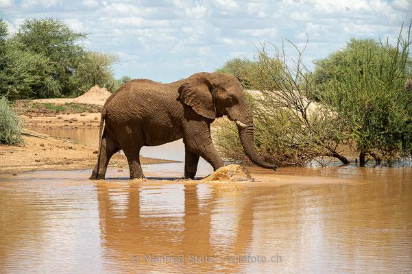 Afrikanischer Elefant, Loxodonta africana, 20180226-D4D4966