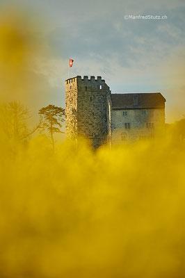 Schloss Habsburg, Kanton Aargau
