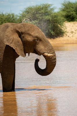 Afrikanischer Elefant, Loxodonta africana, 20180226-D4D4995