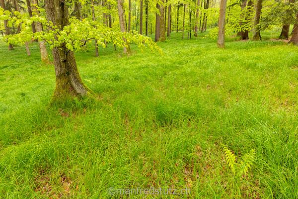Ein spezielles stück Wald im Kanton Aargau