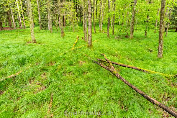 Was für ein schöner Wald im Kanton Aargau
