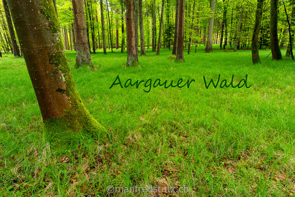 Ein Waldstück im Kanton Aargau