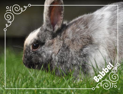 Babbel, ons konijn