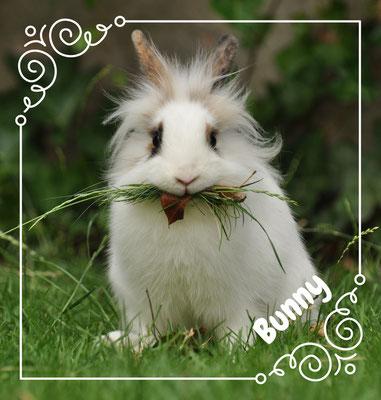 Bunny, ons konijn