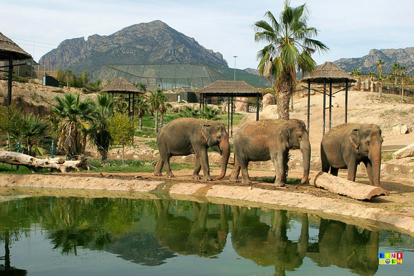 photo benidorm terra natura