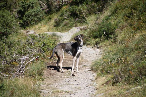 Wandern im Val Sorteny (Andorra).