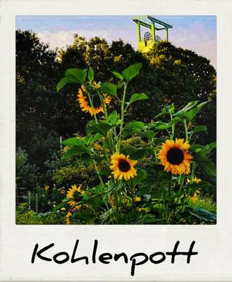 Das Symbol des Ruhrgebiets ist der Förderturm, davor Sonnenblumen in einer Kleingartenanlage im Ruhrgebiet.