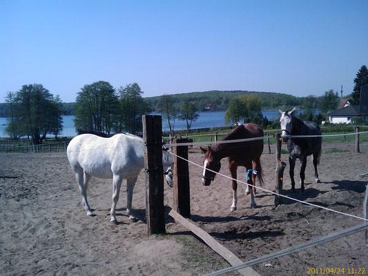 Pferde im Urlaub