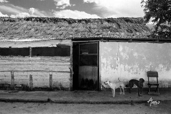 A dos aguas. Bodega de víveres hecha de bahareque. Edo. Bolívar, Venezuela