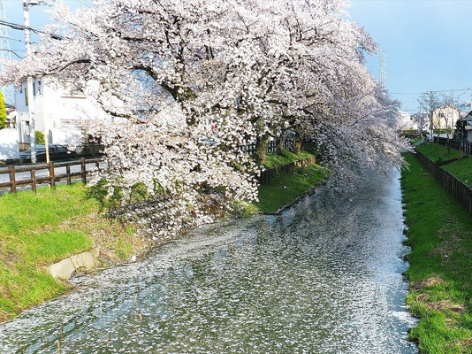氷川神社近くの新河岸川(江戸時代の江戸との交易水路)