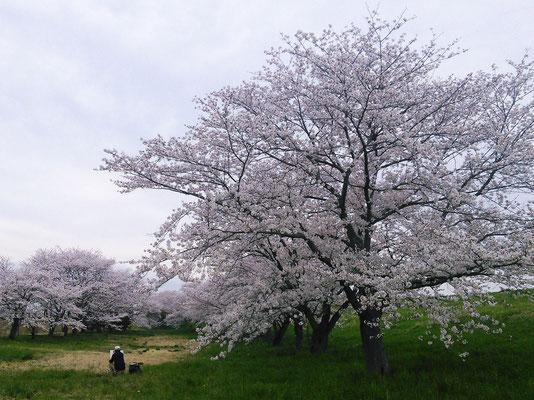 Arakawa Dike, Okegawa, Saitama