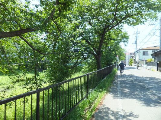川越市仙波付近の新河岸川の桜並木