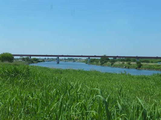 秋ヶ瀬橋の下流からの眺め