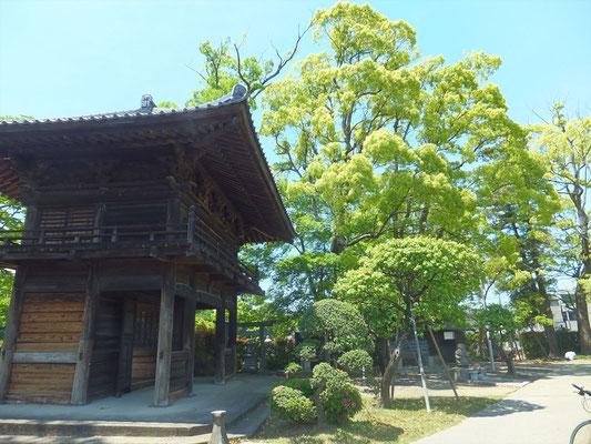 蓮光寺山門の横の巨大な木