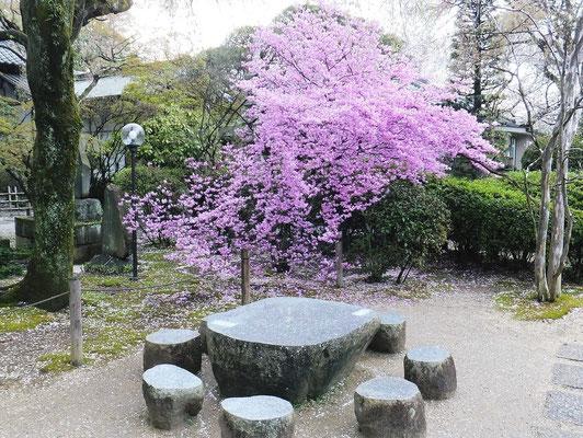 中院での鮮やかな花(名前不明)