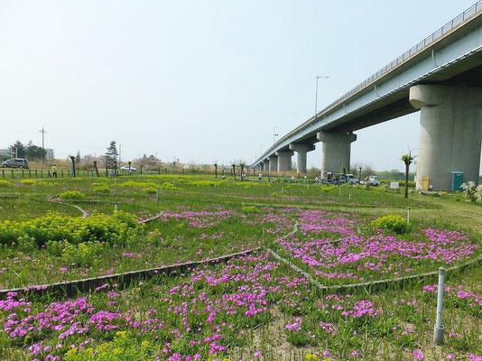 治水橋の下の錦乃原櫻草園1