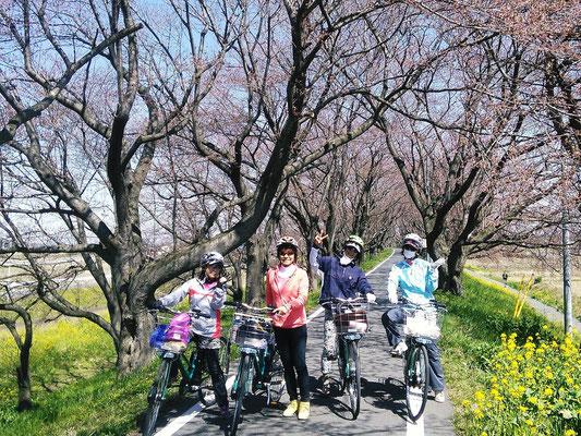 Somei Yoshno @ Sakura Tsumi Park, Yoshimi-cho