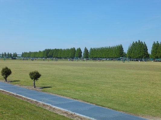 新緑のポプラ並木
