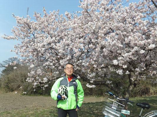 Okan Sakura (オオカンサクラ)