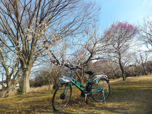 Omiya 2nd Park