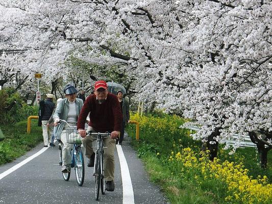 桜並木でのチャリデート!