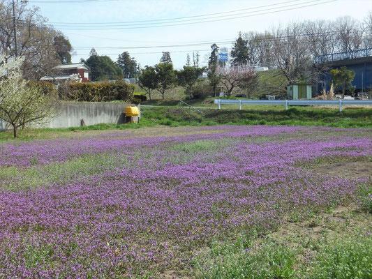 紫色の花 名前は?