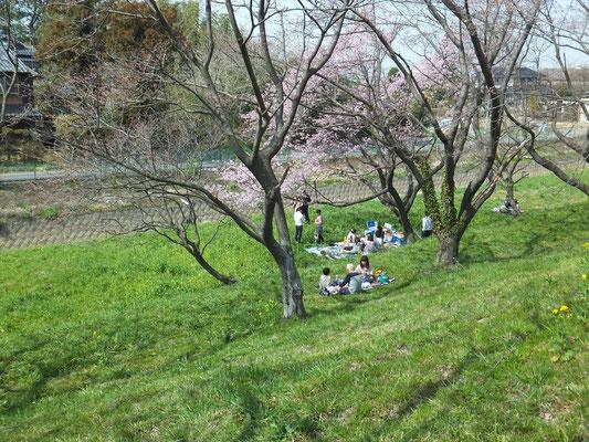 桜堤公園の1.8kmの桜並木で唯一見つけたお花見宴会
