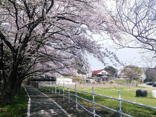Enomoto Diary Farm, Ageo, Saitama