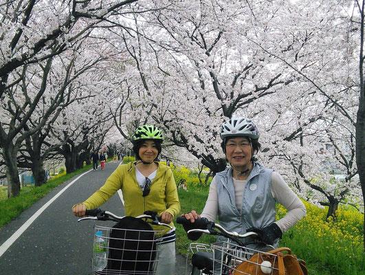 Sakura Tsusumi Park, Yoshimi-cho, Saitama
